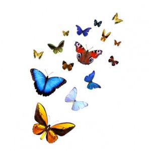 Butterflies-300x300
