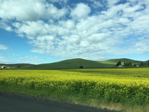 June: The Palouse in eastern Washington state.
